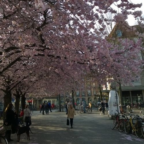 Frühling... Nofilter Lumia1520 Test Zoomlab Münster Nokia @nokia_connects @nokia_deutschland Bericht folgt...