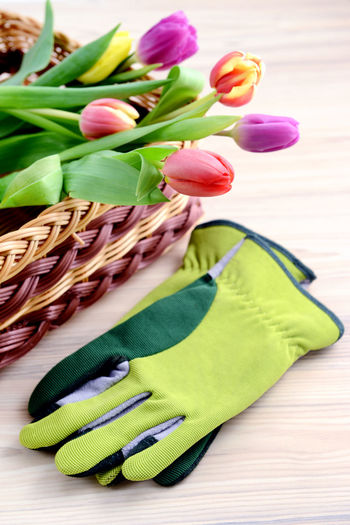 Close-up of tulips in basket with gardening gloves on table
