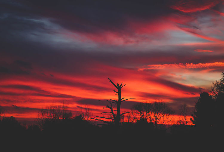 Silhouette trees on landscape against sunset sky