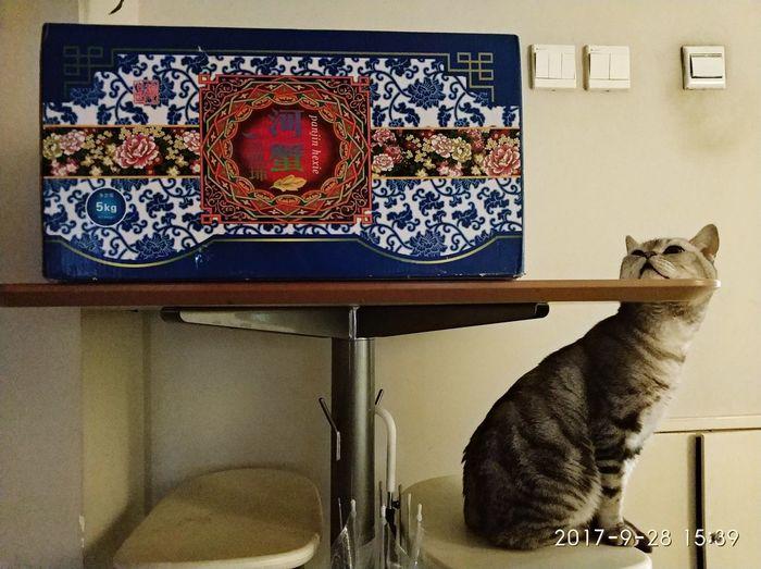 望尘莫及 Cats 🐱 Can't Get it Hahahaha 😂😂😂😂😂