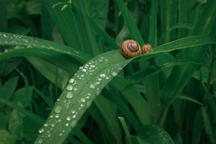 Close-up of snail on plant and raindrops