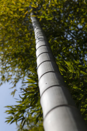 bamboo forest at Gwangyang Cheongmaesil Maeul in Jeonnam, South Korea Bamboo Gwangyang Plant Tree Nature Day Growth Outdoors No People Low Angle View Green Color Selective Focus Branch Close-up Sunlight Beauty In Nature Tree Trunk Metal Trunk Pipe - Tube Tranquility Focus On Foreground Bamboo - Plant