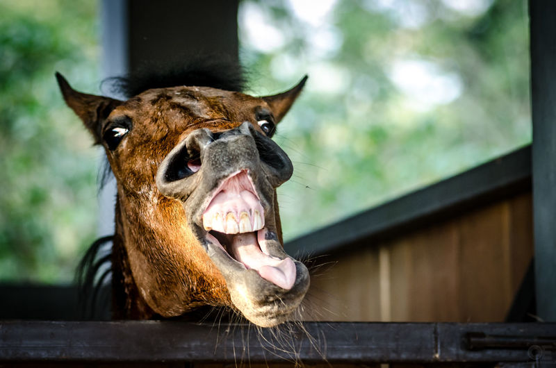 Smiling One Animal Animal Themes Mouth Open Close-up Domestic Animals Outdoors Horsepower Animal Wildlife Naturelovers Beauty In Nature Pasión