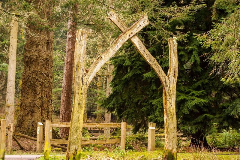 Wooden arch Walking Route WoodLand Forest Man-made In Nature Man-made Structure Tree Outdoors No People Nature Day Tree Trunk Beauty In Nature