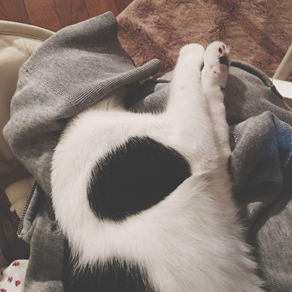 まぶしい おやすみ 〜〜 雨ちゃん しろくろネコ