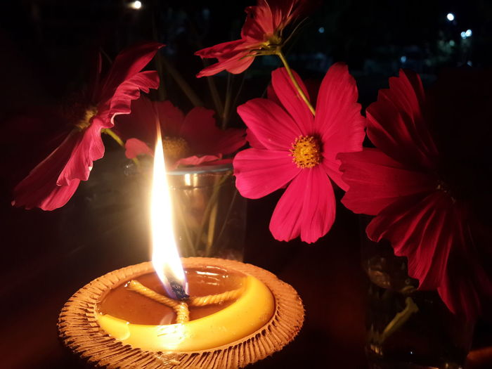 Flame Flower Flowering Plant Nature Candle Plant Close-up Fire Burning Freshness No People Beauty In Nature Petal Illuminated Indoors  Flower Head Heat - Temperature Fire - Natural Phenomenon Inflorescence Glowing Tea Light