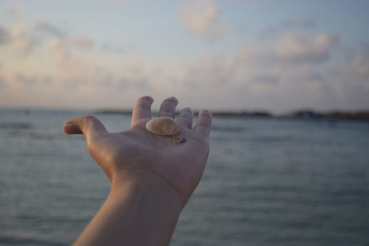 Close-Up Of Hand Holding Seashells