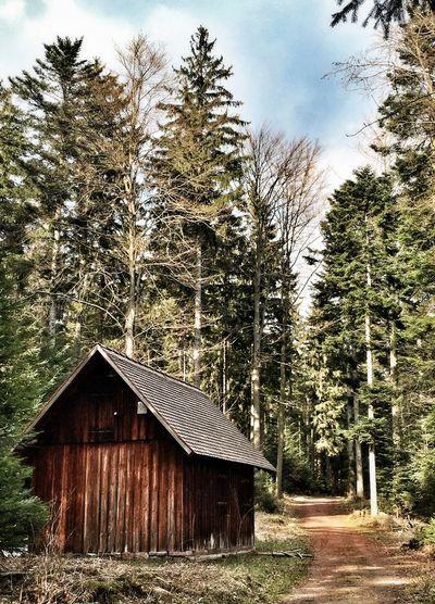 Im Wald... Black Forest Wald Tadaa Community EyeEm Deutschland EyeEm Best Shots Nature EyeEm Nature Lover
