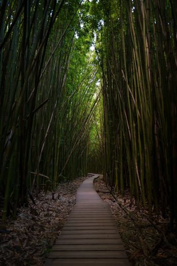 Hiking Trail Bamboo Forest Landscape