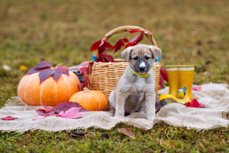 View of a dog in basket