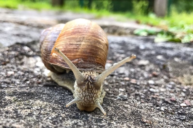 One Animal Animal Themes Animals In The Wild Wildlife Day Outdoors Animal Wildlife Nature No People Close-up Fragility Snail Macro