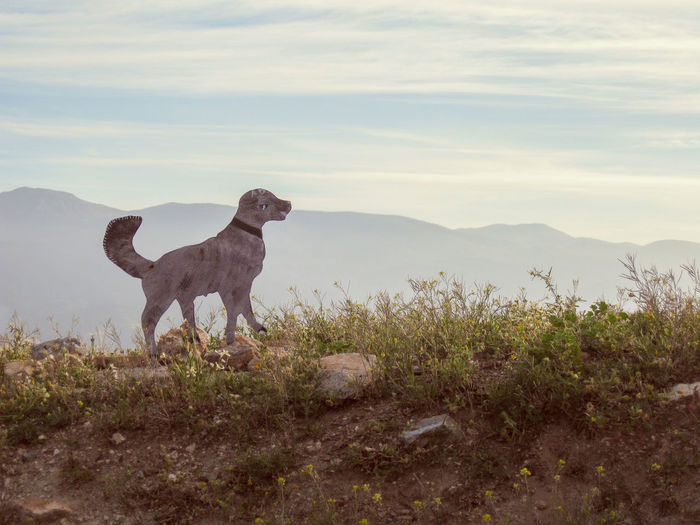 A sculpture of a dog in a mountain landscape Animal Themes Cloud - Sky Dog Domestic Animals Grass Hond Landscape Mountain One Animal Perro Sculpture Silhouette Standing