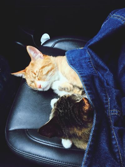 Lovable Pets Lovely Cats Cute Cats Cats Of EyeEm Sleeping Cats Pet Portrait I Love My Cats
