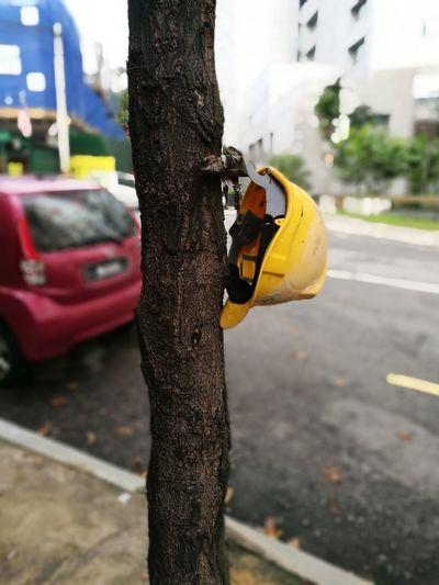 Walking around First Eyeem Photo Huawei P9 Leica City No People Tree