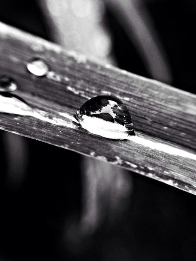 some rain came. Colors Of Autumn Macro Change Your Perspective Raindrops