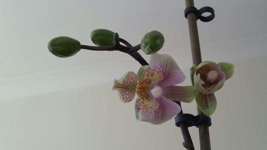 Check This Out Orchid Plant Yay From My Point Of View