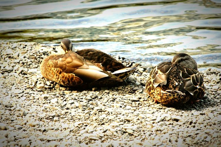 sunbathing on the bank of the Rideau River