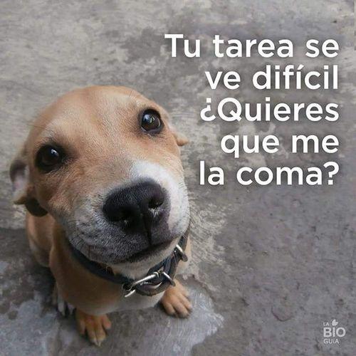 Perro Tarea