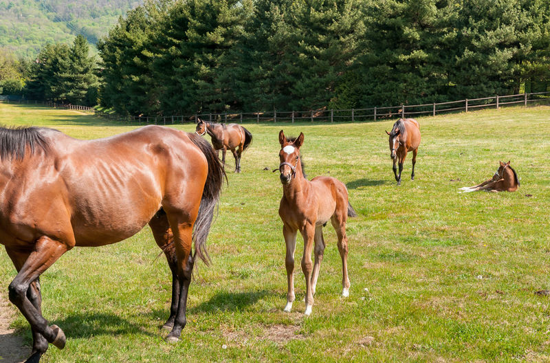 English Thoroughbred foal horse on the field. Mammal Domestic Animals Animal Domestic Pets Land Horse Vertebrate Animal Wildlife Brown Nature No People Day Outdoors Herbivorous Field Ranch Group Of Animals English Thoroughbred Horse English Thoroughbred Agriculture English Thoroughbred Nature Equine Foal