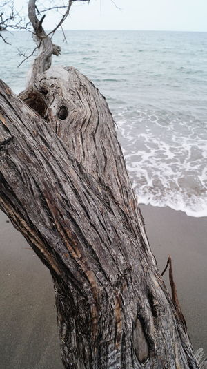 Bark Texture Background Beach Beauty In Nature Close-up Day Horizon Over Water Nature No Filters  No People Outdoors Sea Sky Water Wood - Material
