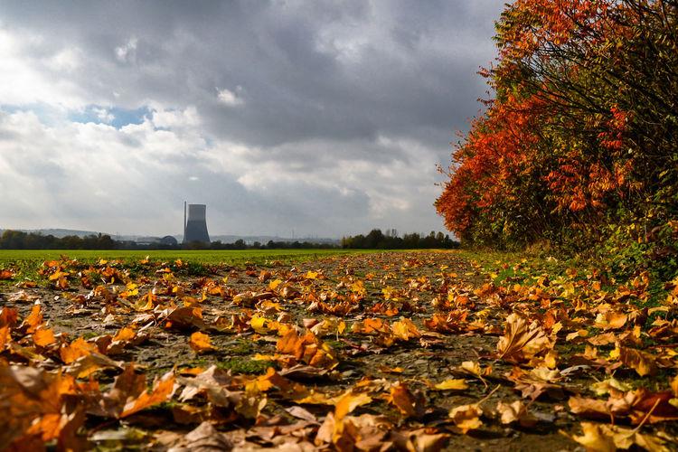 Autumn leaves on field against sky
