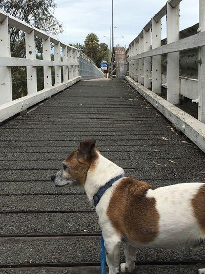EyeEm Selects Outdoors Bridge my beautiful boy