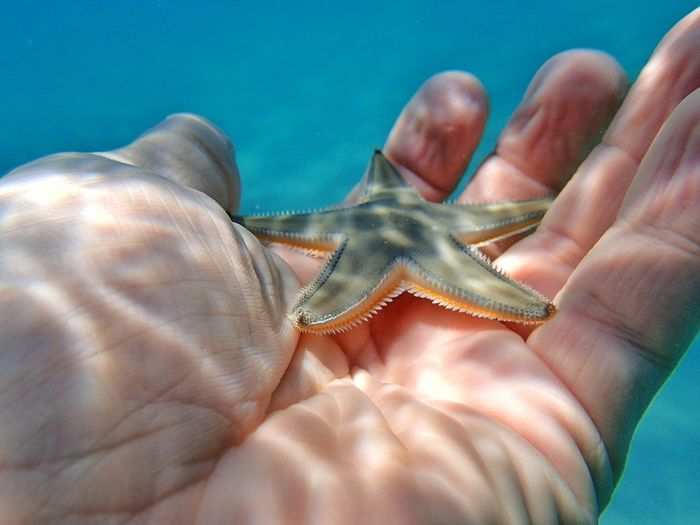 Cropped hand holding starfish undersea