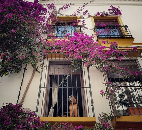 Terraza Flores Pueblo Perro Arte Rural Encanto Flower Window Built Structure Nature Art Natural Plant Dog Dogslife