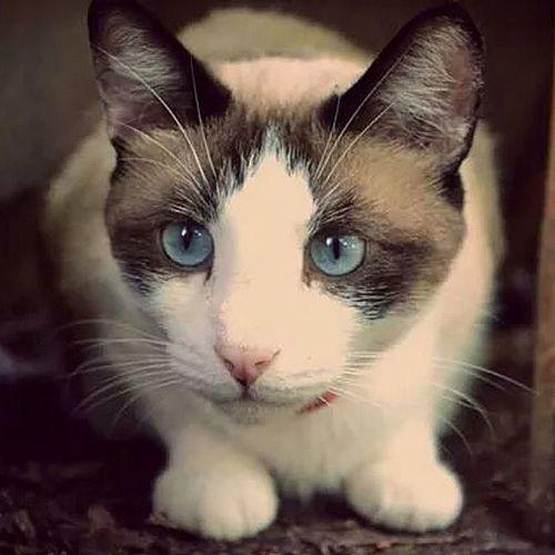 My Cat Steven Kitty Beautifukitty Mix Nature Bestfriend Beautiful Art