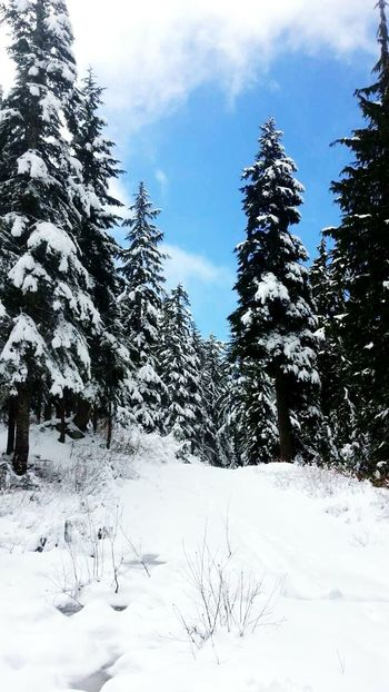 Mountains Snow Pinetree Winterscapes Canada Hicking Landscape Coldweather