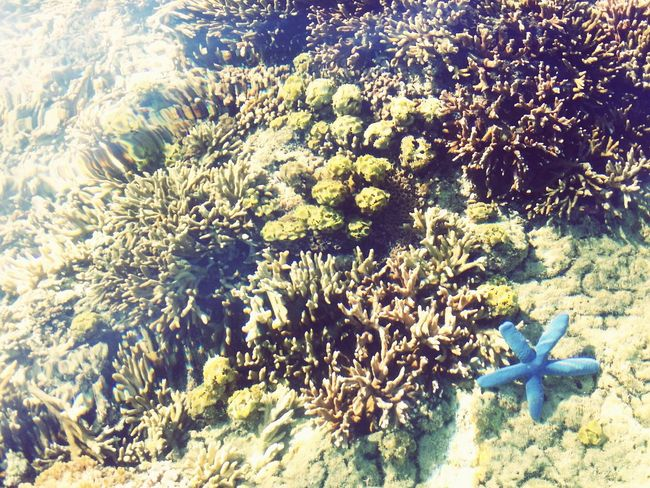 Marine Life Coralstone Corals Global EyeEm Adventure - Philippines DECEMBER2015 Adventures Life In An Island during low tide, you can see a lot of corals, fishes and other marine animals. Unfortunately, i only took few photos.