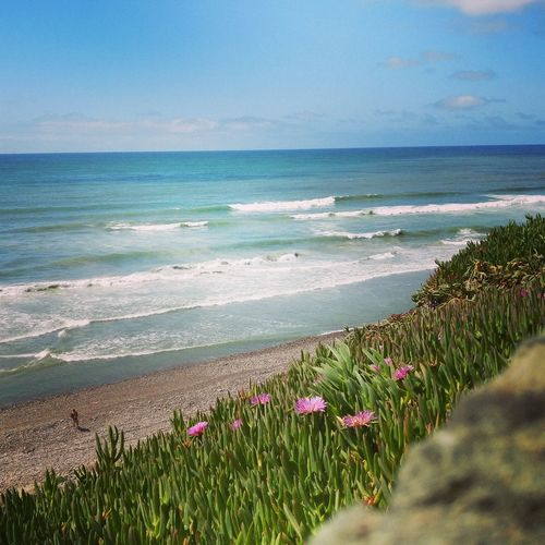 Beach Sea Beauty In Nature Sand Rocks And Water Flower Nature Water Plant Outdoors Scenics Freshness San Antonio Del Mar, Baja California Pink Flowers Long Goodbye