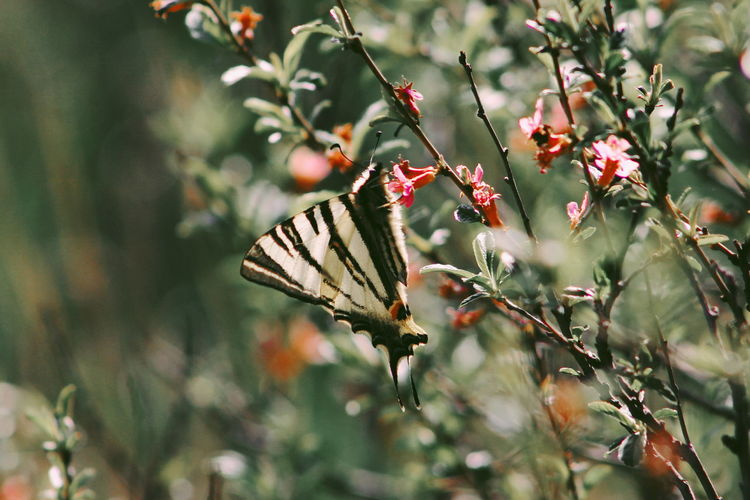 Plant Growth Tree Beauty In Nature Day Nature No People Close-up Focus On Foreground Flower Branch Flowering Plant Freshness Plant Part Leaf Outdoors Animals In The Wild Selective Focus Green Color Animal Themes Butterfly - Insect Pollination Butterfly Green Flowers