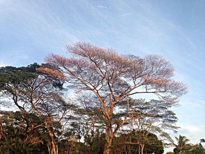 Nature Sky EyeEm Nature Lover Landscape