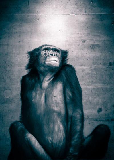 Close-up of monkey on human hand