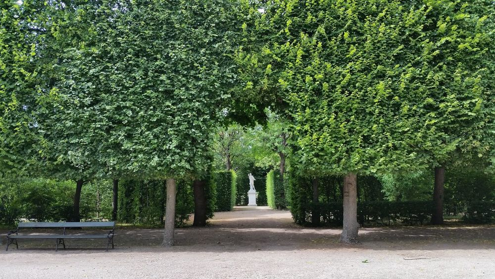 Austria Bench Day Different Shades Of Green Green Color Growth No People Outdoors Schönbrunn Statue Symmetry Tree Trees Vienna Garden Shadows