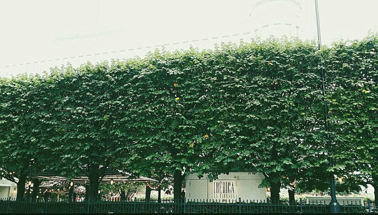 Wall of trees Trees Lights Canary Wharf London 2014