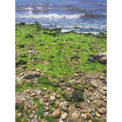 Land & Sea NY Longisland Amityville Bay Bench Seaweed Waves Vscocam