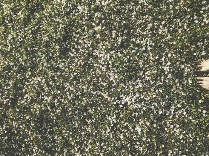 Nature Patterns Bare Feet Petals Grass Pattern, Texture, Shape And Form Nature Textures Man And Nature