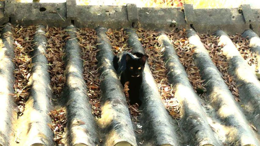 Félin  Cat Oh Yeeeaaa ! Surprise! Catoftheday Cateyes Blackcatlove Sweet Cat