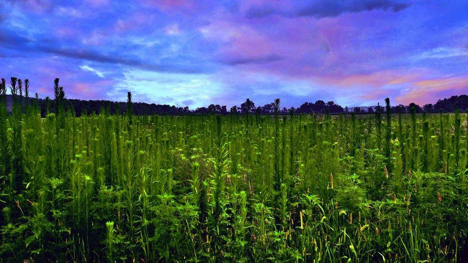 Beautiful Nature Scenicview Wild, Wonderful, West Virginia Sky