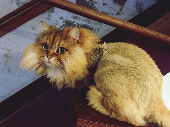Cat Cafe Cute