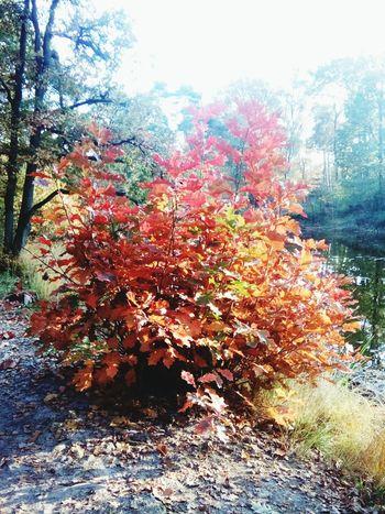Autumn Colors Enjoying Life Nature Photography TreePorn Getting Inspired Autumweather Hello World Enjoying Life
