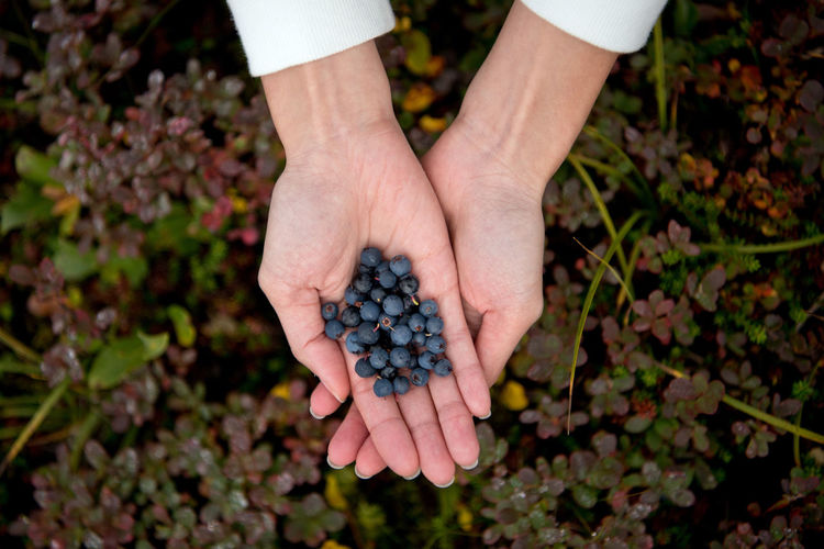 Blueberries is everywhere ! Berries Blueberries Close-up Field Flower Focus On Foreground Freshness Freshness Holding Human Finger Leaves Nature Outdoors Person Personal Perspective Relaxing Wild Berries ShareTheMeal Done That.