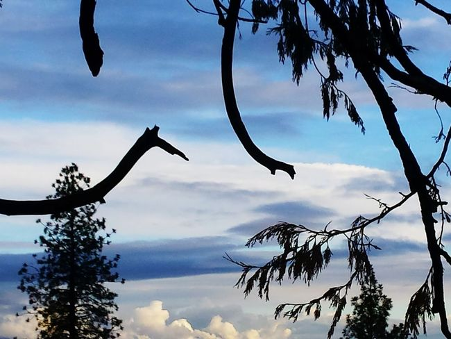 Watercolor by Nature Surreal Blue Sky No People EyeEmNewHere Nature Love Pine Ridge Tree Branch Sky Outdoors