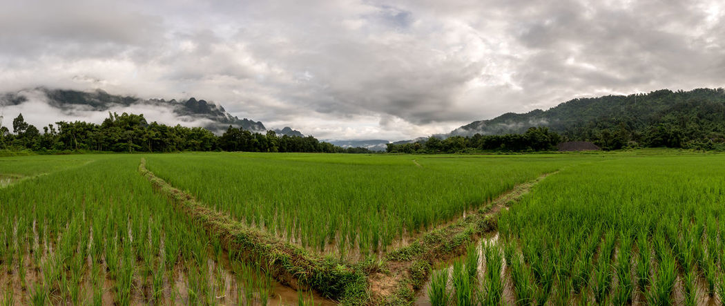 ASIA Cambodia Cloudy Sky Farmland Green Lifestock South East Asia Thailand Crops Laos Outdoors Ricefield Ricefields, Sea Wet