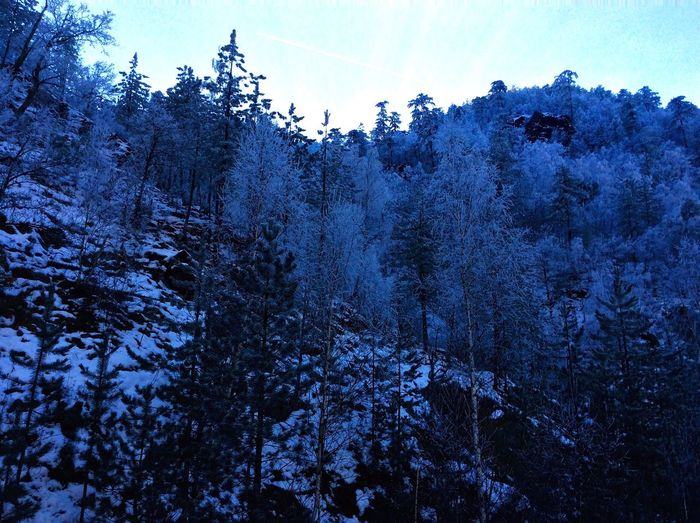 The Snow Wood First Eyeem Photo