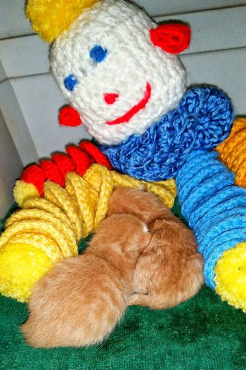 Cats Of EyeEm Kittens Substitute Mother Clown Cat Lovers Animal Lovers Love Of Animals Animal Photography Telling Stories Differently Orange Tabby Cat Tiny Paws Manix Manix Cat Trucker Cats American Bobtail Cat New Born Kitten Kitten Cats Orphaned Kitten when your mother abandoned you and now have a clown for a mom. Poor Babies now snuggle to a Toy Clown . It gives them comfort and warmth. Im a new mom now,after finding 2 new born babies. Everything needs love no matter where they get it from. Security Blanket Cat Napping we're all mothers Kittens Sleeping Napping Kittens