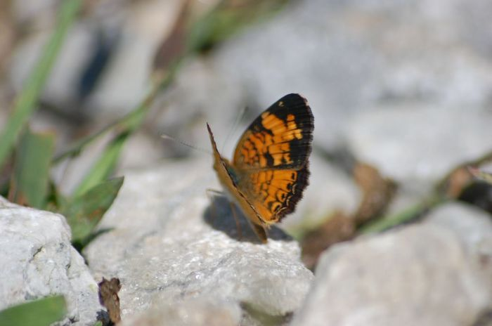 Beauty In Nature Day Outdoors Nature No People Color Of Life! Orange Color Butterfly Stone