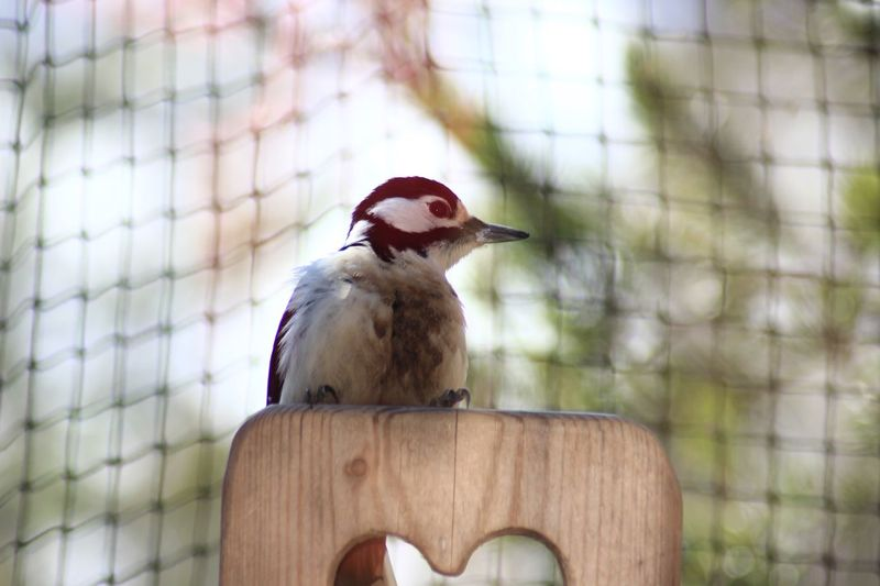 Norway EyeEm Selects Bird Animal Themes One Animal Animals In The Wild Animal Wildlife Day No People Bird Feeder Focus On Foreground Woodpecker Perching Close-up